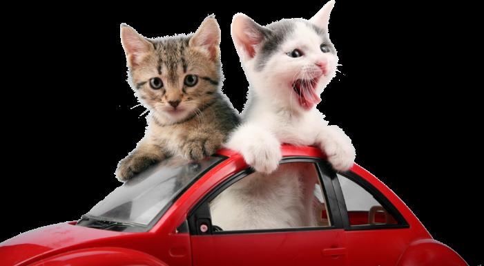 Kattungar som sitter i en bild och sticker ut sina huvud ur taket